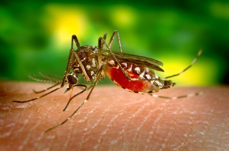 Чего боятся комары?