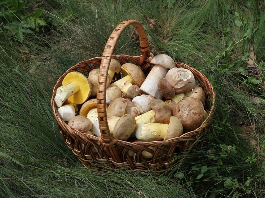 Что делать со свежесобранными грибами? Варим, жарим, парим