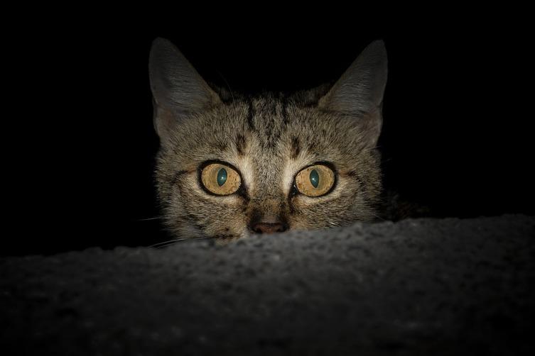 Для чего кошке усы?