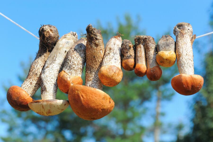 Как правильно сушить грибы?