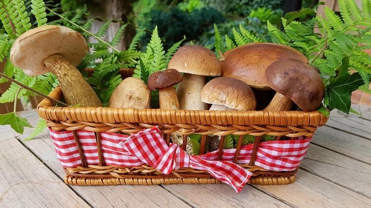 Грибы. Как не отравиться «растительным мясом»?