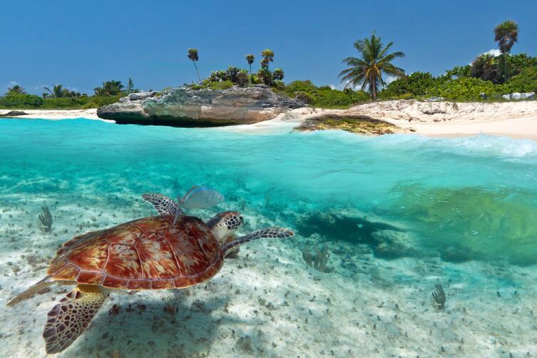 А можно попробовать необитаемый остров в Карибском море