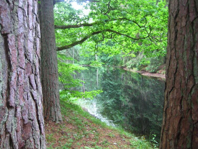 Внутренние пруды, связанные в каскад. Михайловское