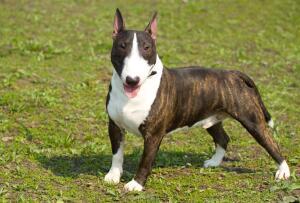 Как выбрать породу собаки? Часть 1. Экстерьер