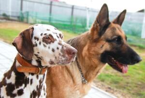 Как выбрать породу собаки? Часть 2. Характер