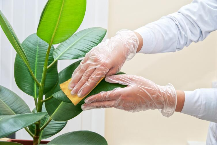 Любите свои растения и они будут радовать вас круглый год