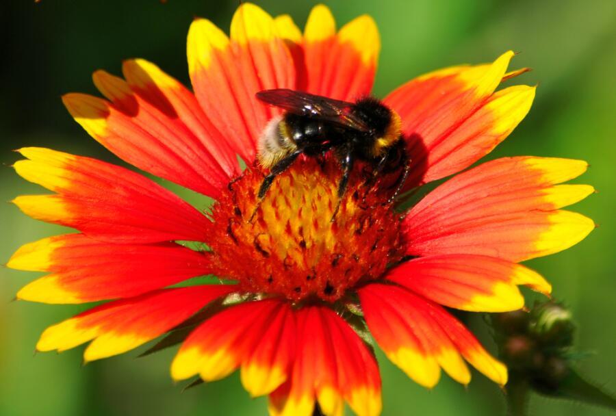 Будьте пчелами, не уподобляйтесь мухам!