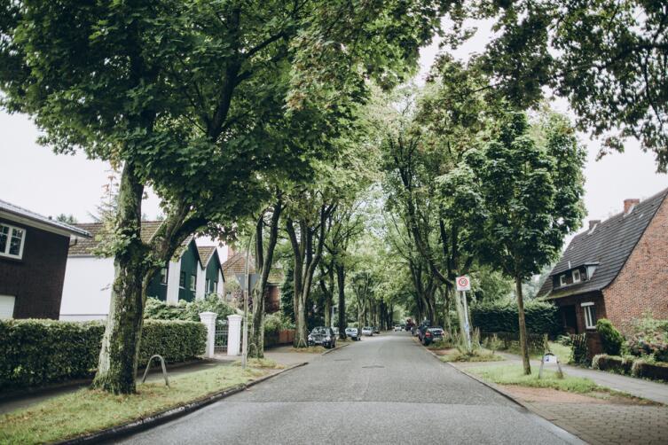Городским деревьям приходится выживать