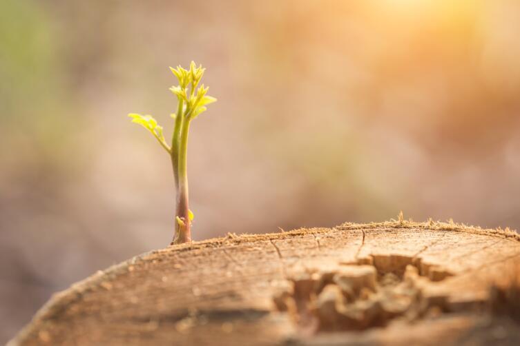 Дерево может восстановиться, даже если потеряет значительную часть своего тела