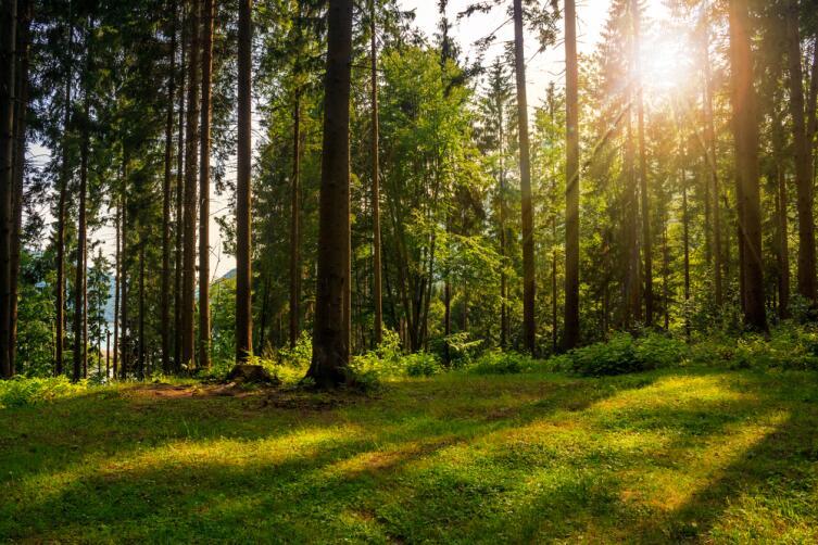 Как деревья общаются между собой?