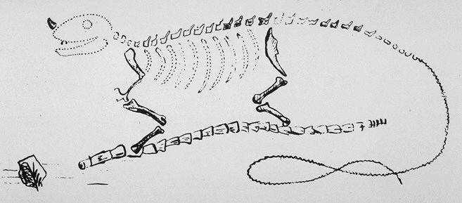 Реконструкция игуанодона Г. Мантелла — первая в истории реконструкция динозавра