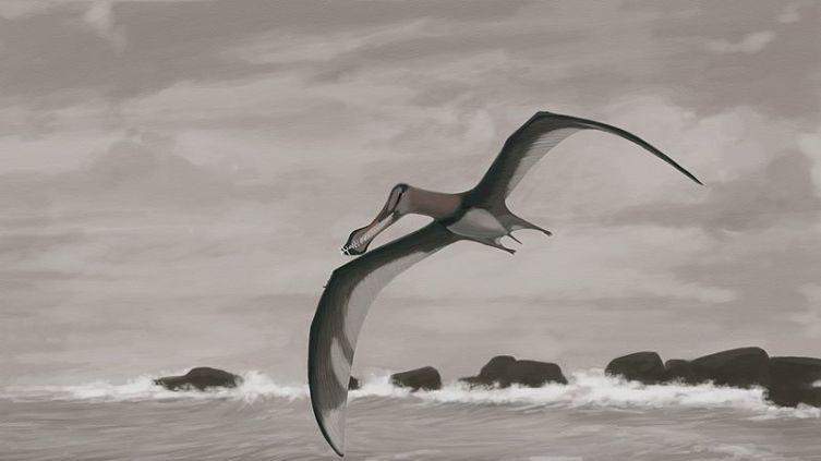 Птерозавр конца мелового периода
