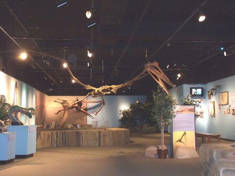 Скелет птерозавра, демонстрируемый в Аризонском музее естественной истории