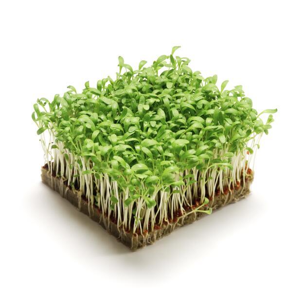 Зелень портулака для салата