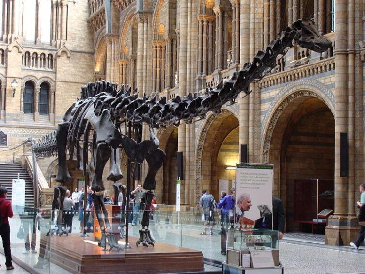 Копия скелета диплодока в Лондонском музее естествознания