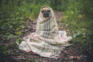 Порой осень влияет на собак так же, как на людей: у них тоже начинается депрессия!
