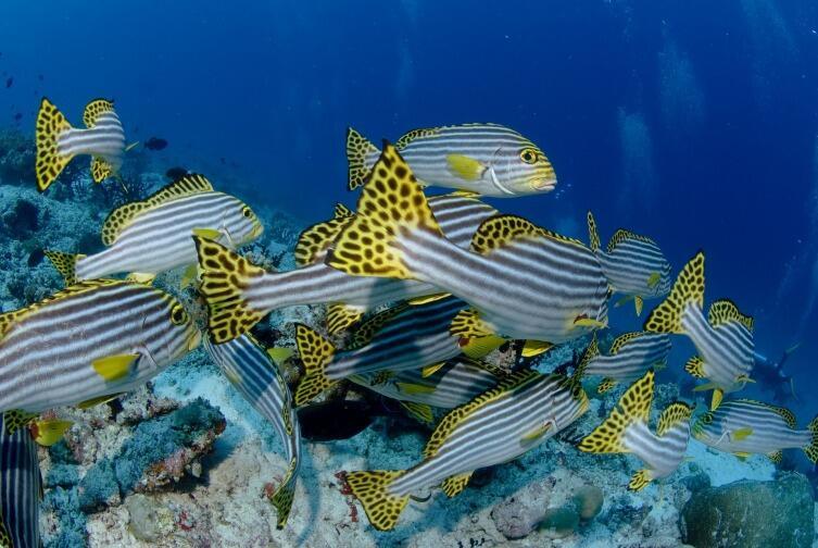 Как сделать безопасным первое погружение с аквалангом?