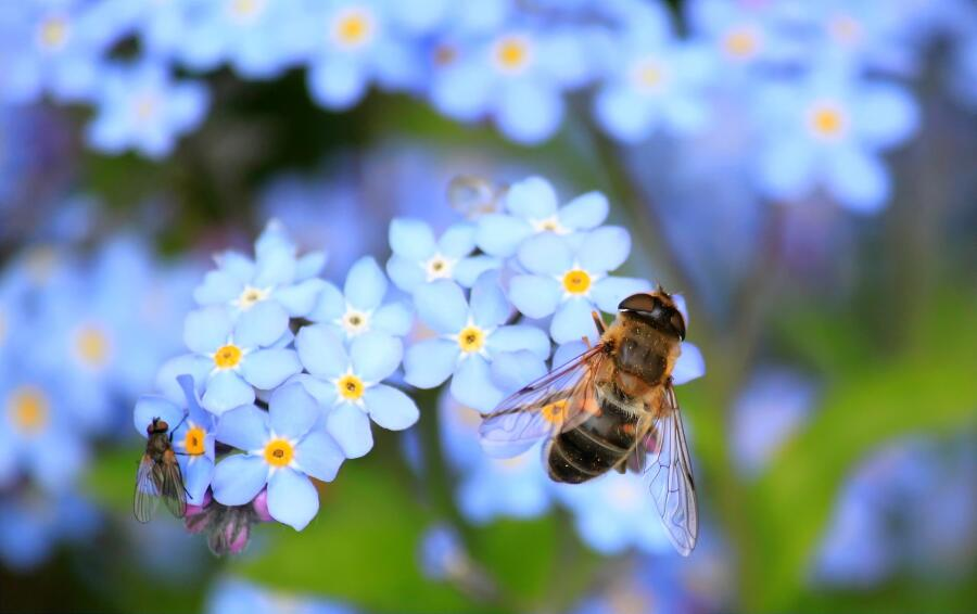 Почему вымирают пчелы?