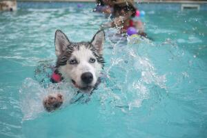 На что обратить внимание при выборе бассейна?