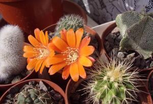 Растение, к которому нужен особый подход - не вплотную.