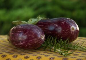 Баклажаны содержат вещество соланин, чем и объясняется их слегка горьковатый вкус.