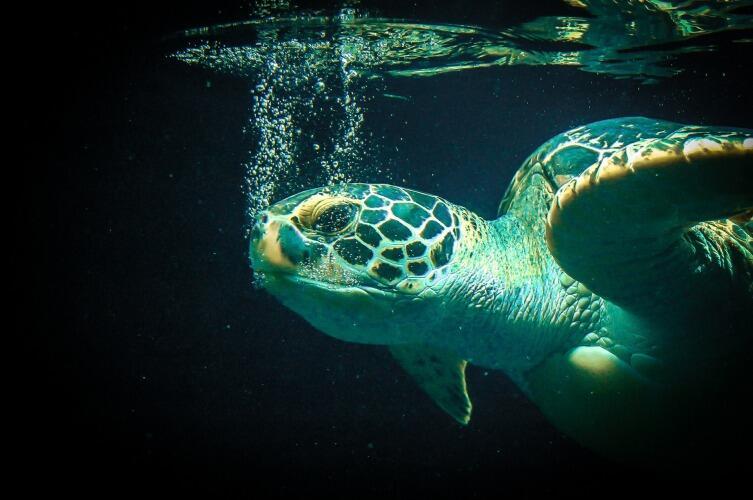 Что делать с черепахой-отморозком?