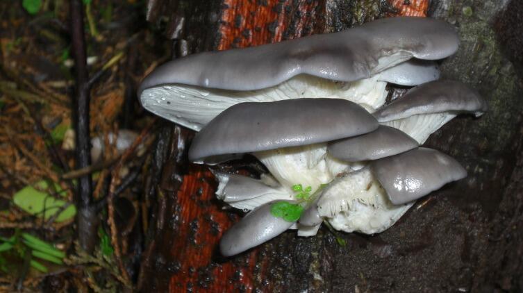 Даже грибы выходят на охоту!