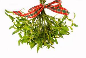Среди национальных имен омелы - «дубовые ягоды» в России, «крестовая трава» во Франции, «громовая метла» в Швейцарии, «панацея» и «птичий клей» в Англии.