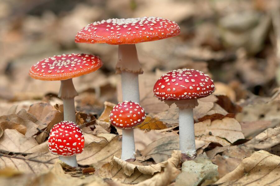 Какие грибы опасны для жизни? Часть 1