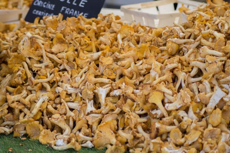 Даже съедобными грибами можно отравиться, если употребить их несвежими. Грибы портятся очень быстро!