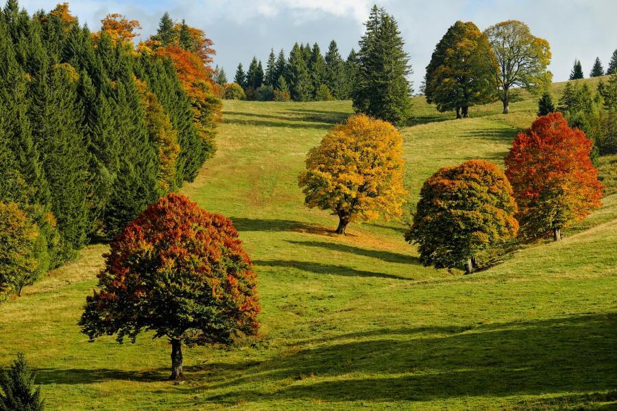 Ученые полагают, что лесов станет больше, а пашни исчезнут
