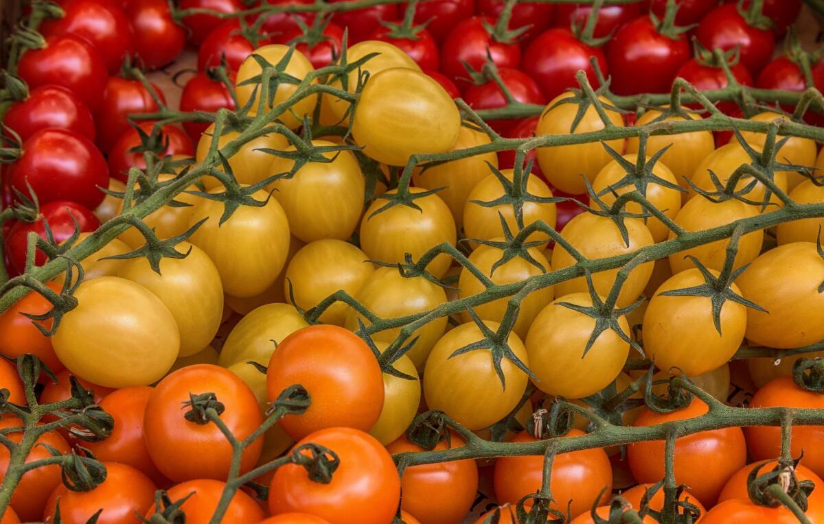 желтый томат картинки распечатать, желательно