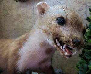 Животных по степени уменьшения опасности укусов можно расположить в следующем порядке: волк – лиса – кошка – собака – крупный рогатый скот.