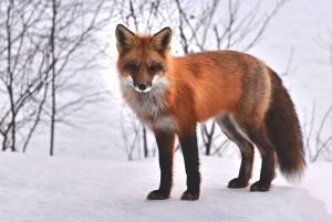 Когда и как праздновать Всемирный день защиты животных?