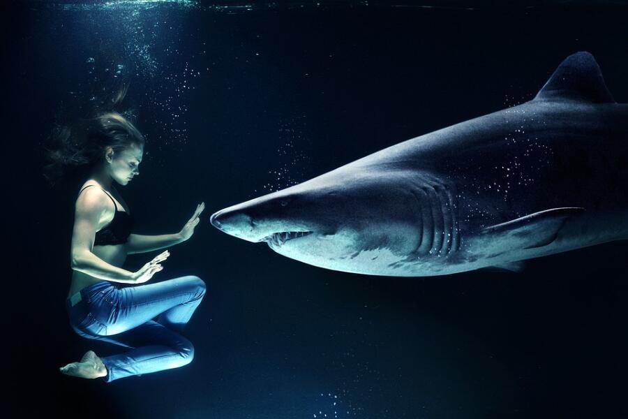 Бывают ли пресноводные акулы?