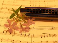 Ваша гармоника должна радовать слух – Ваш и Ваших слушателей, что бы Вы ни играли!