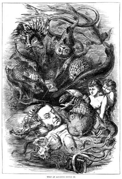 «Каким должен быть аквариум» — Английская гравюра 1876 г.