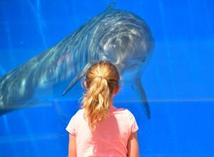 Это один из видов знаменитой рыбки килли. А у вас, в аквариуме, она есть?
