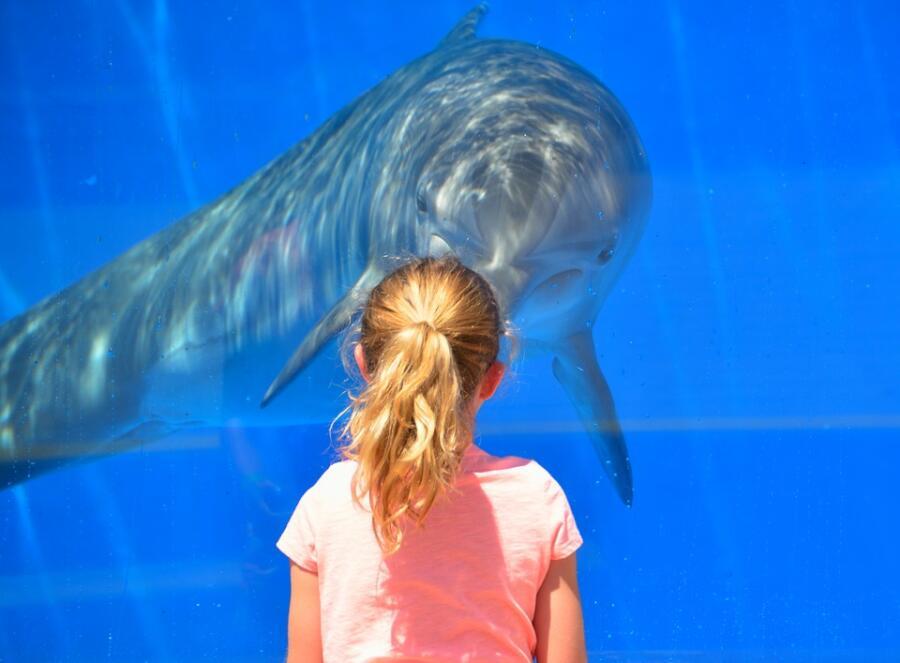 Что мы знаем об изобретателе аквариума?