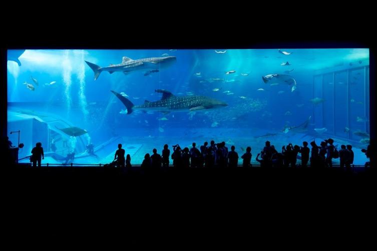 Современный аквариум, Окинава, Япония