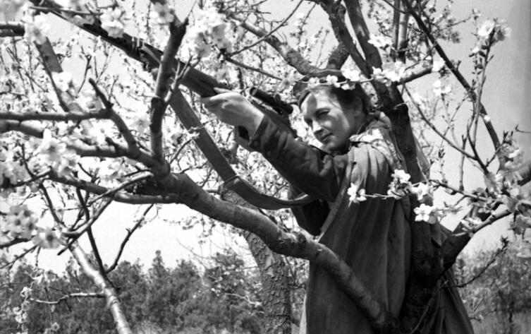 Советский снайпер старший сержант Л.М. Павличенко во время обороны Севастополя