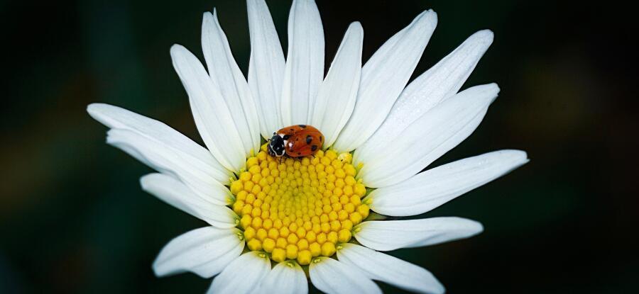 Латреиль предложил классифицировать насекомых по родам и семьям
