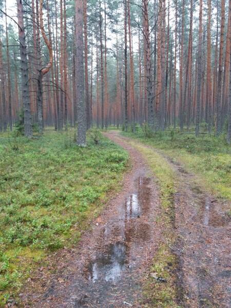 Примерно вот такими дорогами пробирались по этим местам в начале прошлого века изыскатели…