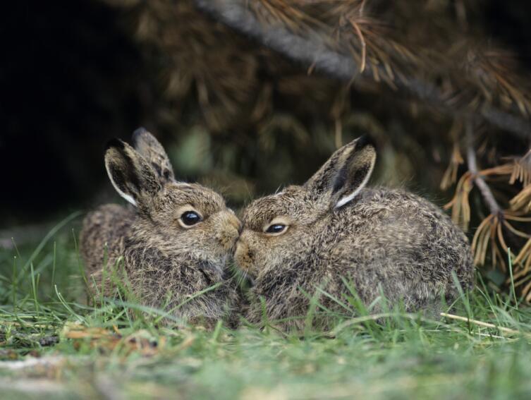 Как проявляют свою любовь животные?