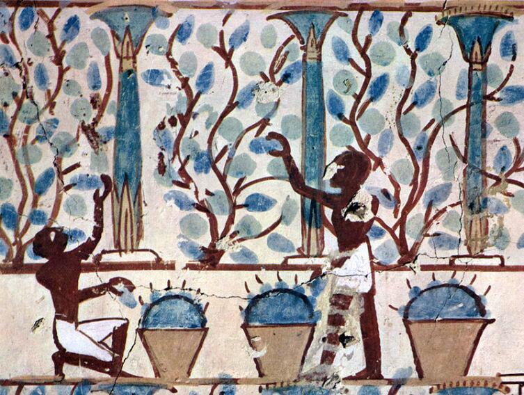 Египтяне собирают урожай фруктов для производства вина. худ. Maler der Grabkammer des Nebamun, около 1422—1411 гг.