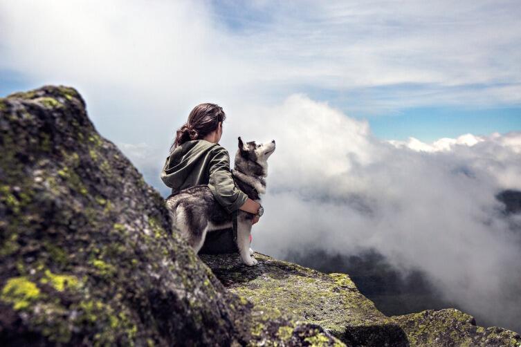 Собака должна знать - хозяин всегда лидер!