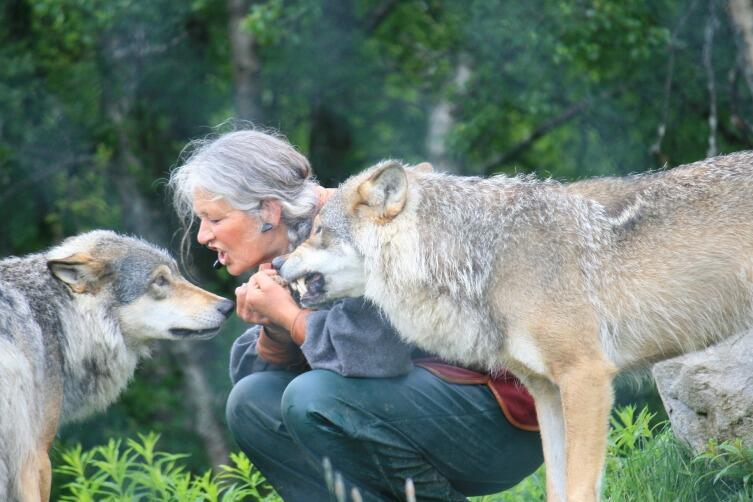 Дрессировщик покоряет зверя с помощью чувств
