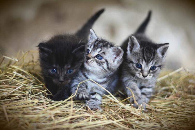 Как выбрать котенку имя?