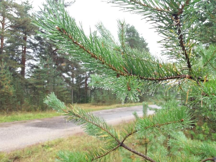 Если по А114 Новая Ладога-Вологда, после отворотки на Чагоду, уходим вправо — на Белые Кресты, Левочу, какая-то сотня километров и…