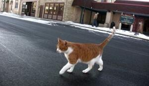 Может ли кот стать мэром города?